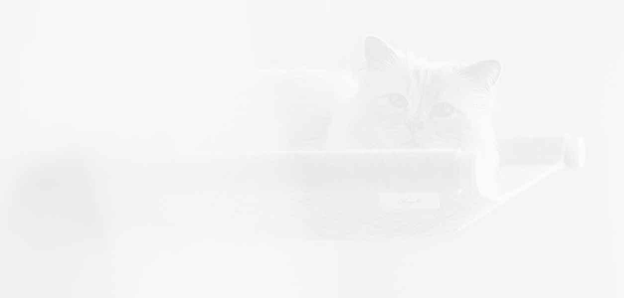 Не се шегуваме, котката на Карл Лагерфелд не спира да прави бизнес