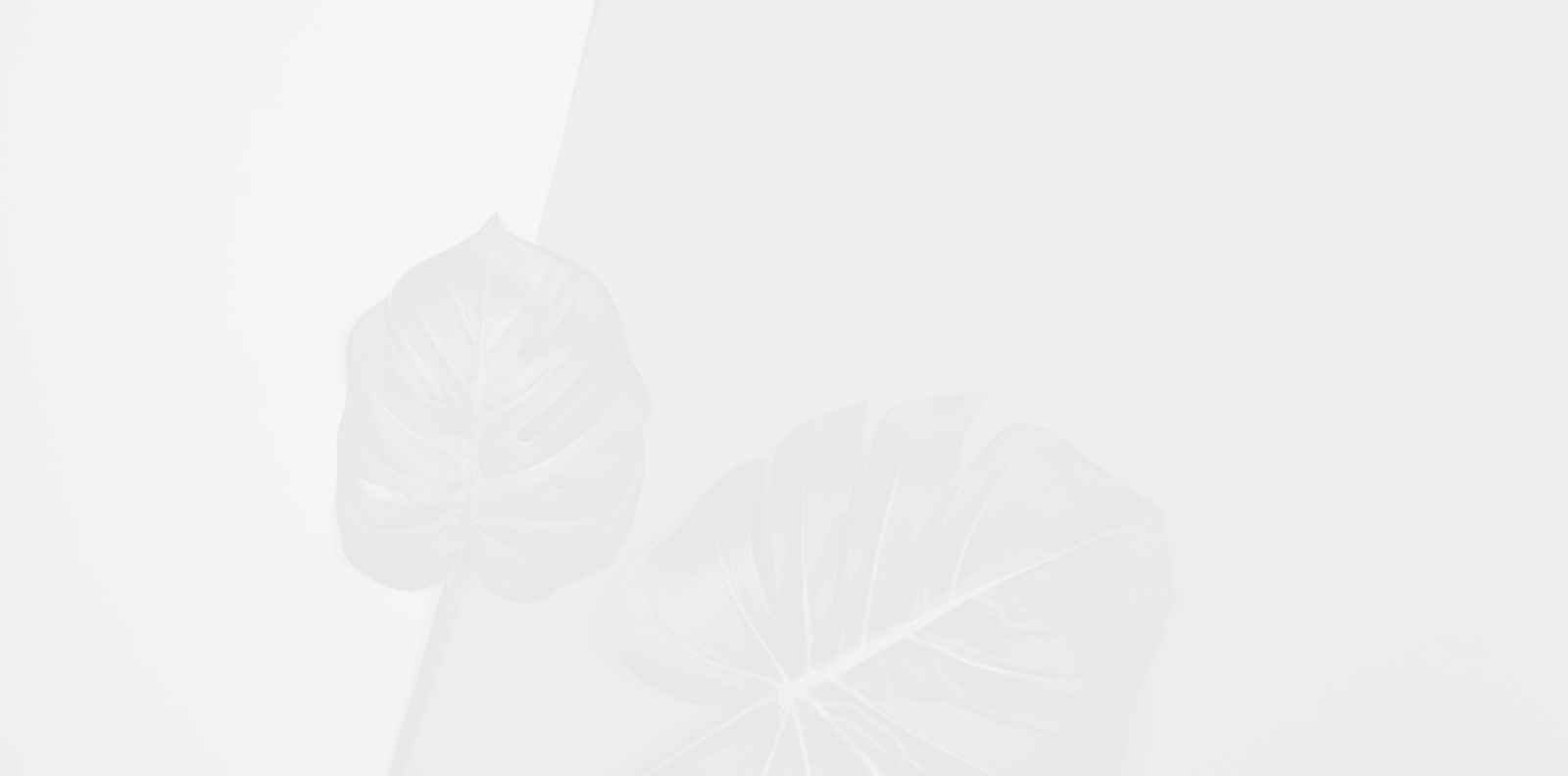 Фикусът, най-обичаното растение в Instagram, е отровен за домашните ни любимци