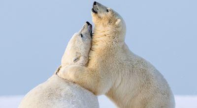 14 очарователни кадъра за Международния ден на прегръдката