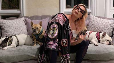 Лейди Гага дава 500 хиляди долара за кучетата си