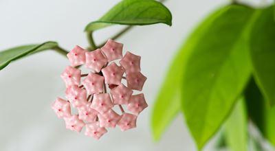 Instagram's TOP 3: най-сниманите растения в интериора