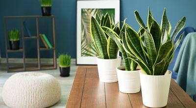 Кои са най-популярните растения в Instagram?