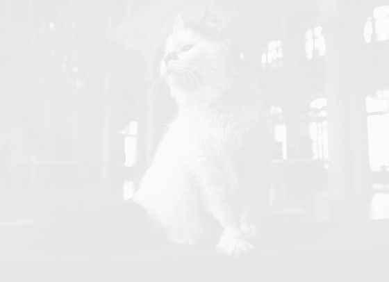Котките на Ермитажът